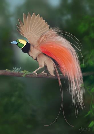 極楽鳥の図